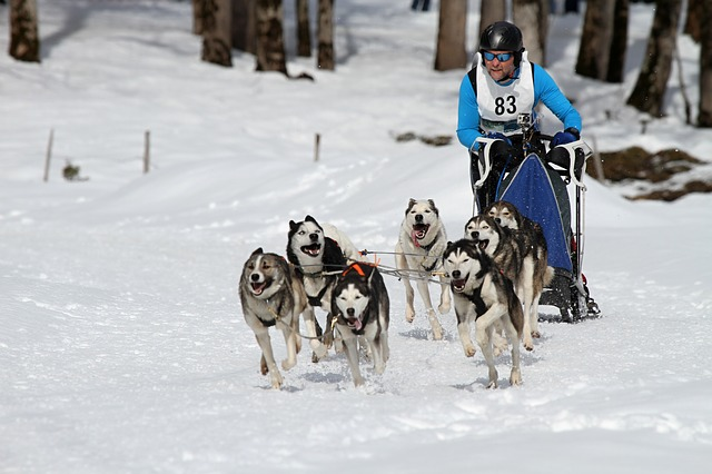 sled-dog-racing-273412_640